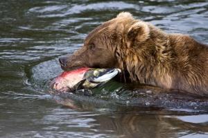 Salmon-To-Go