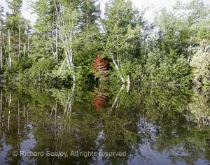 Magalloway Reflection