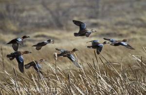 Flock Flushes