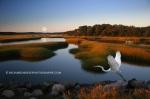 Marsh in the Morning