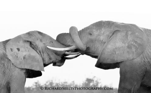 Elephant Knot