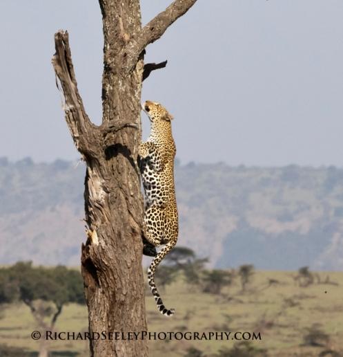 Launching Leopard