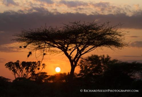 Acacia Sunrise