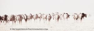 Returning to the Serengeti
