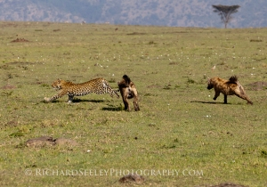 Hyenas in Pursuit