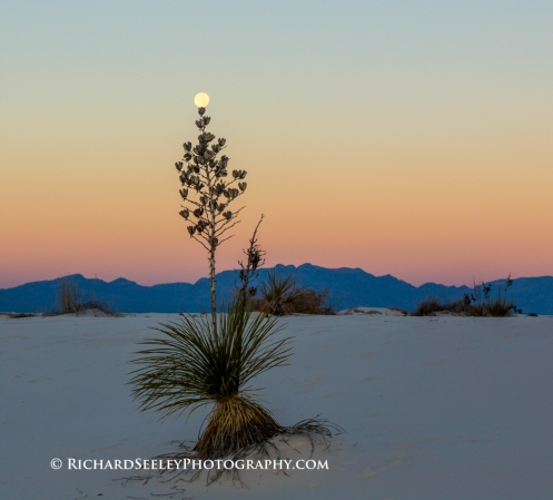 Yucca Balancing Full Moon