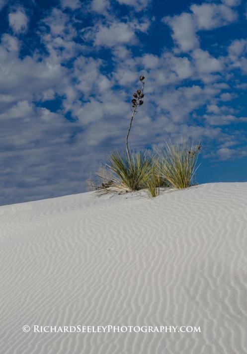 Yucca Wind Wrinkles